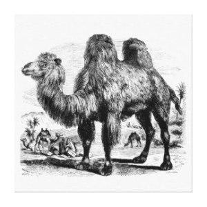 vintage_kameel_1800s_de_egyptische_sjabloon_van_canvas-r28d4c85bbe30481399dd3887b3a1f157_2ub7_8byvr_324